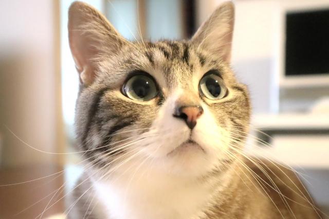 考える猫の画像