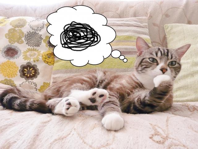 悩む猫の画像